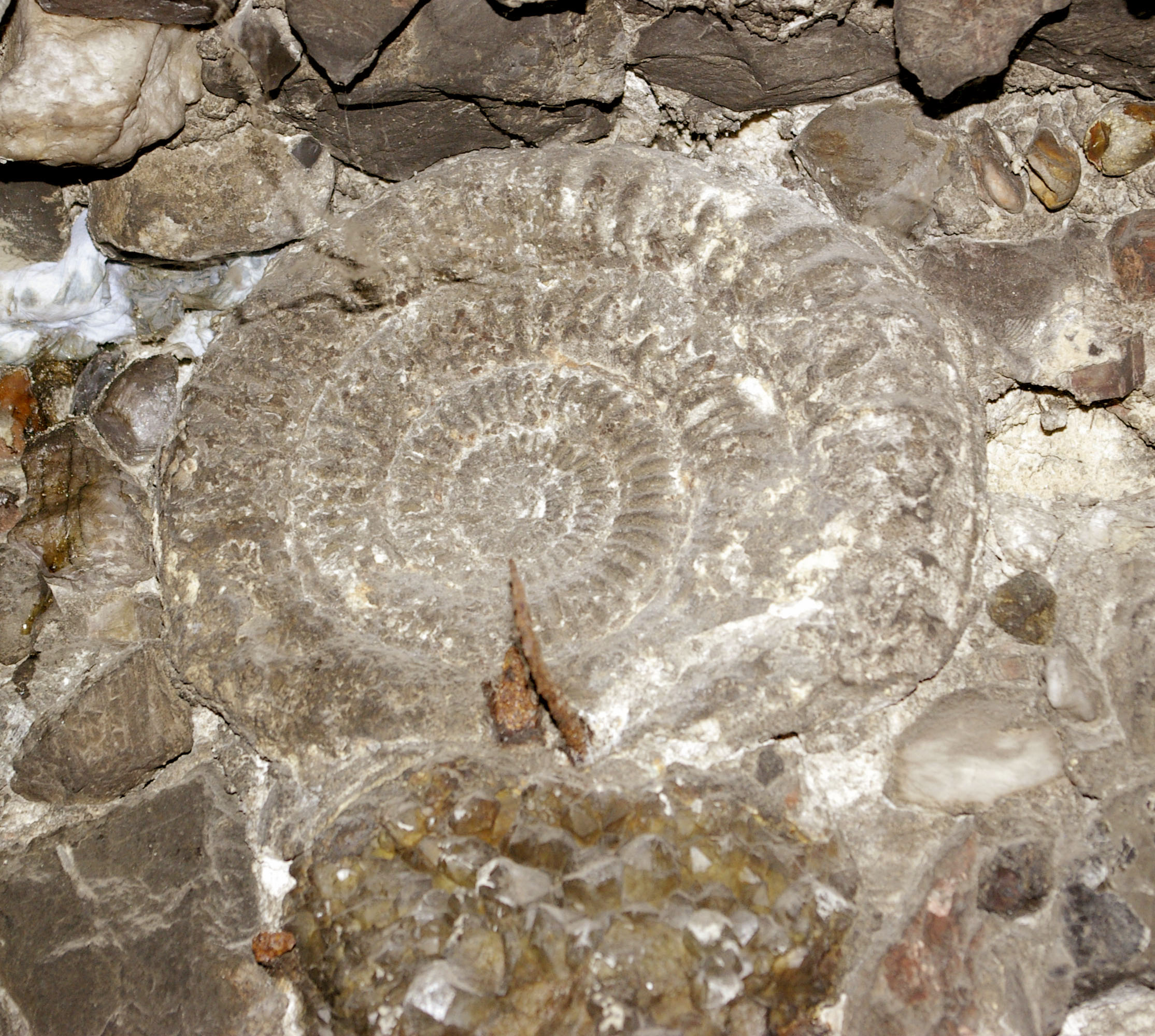 One of the ammonite casts in the Gallery